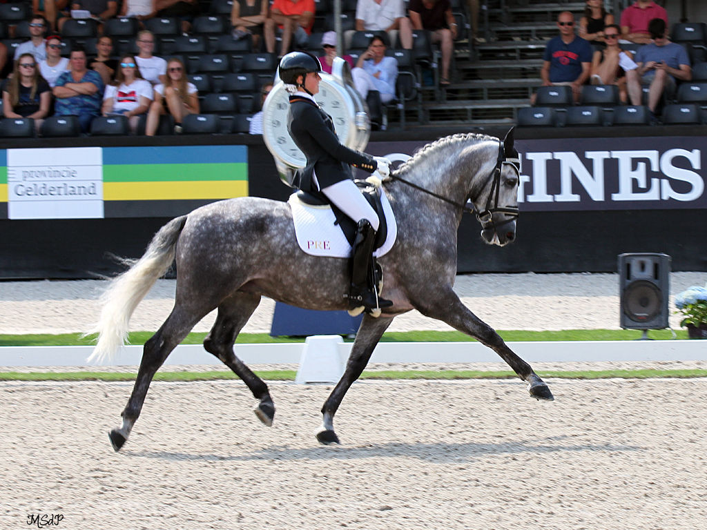MOLINERO FS MAKES HISTORY, with the highest score of the Spanish dressage team.
