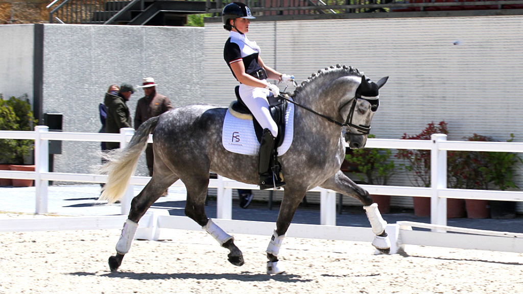 Andalusian horse top dressage for sale