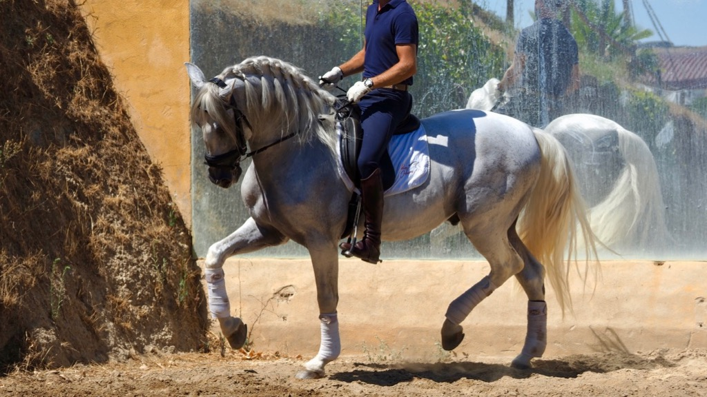 Pre Andalusian Horse with passage and flying changes piro free